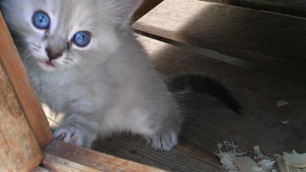 20140518e kitten